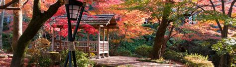 festivals    november   japan japan