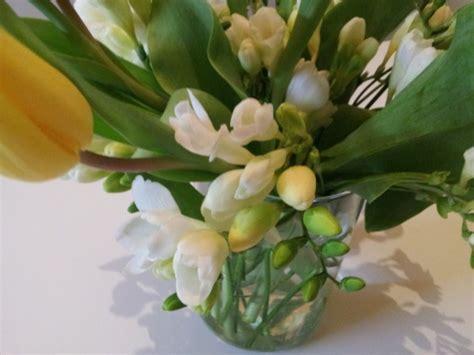 fresie fiori fresie coltivazione e cure