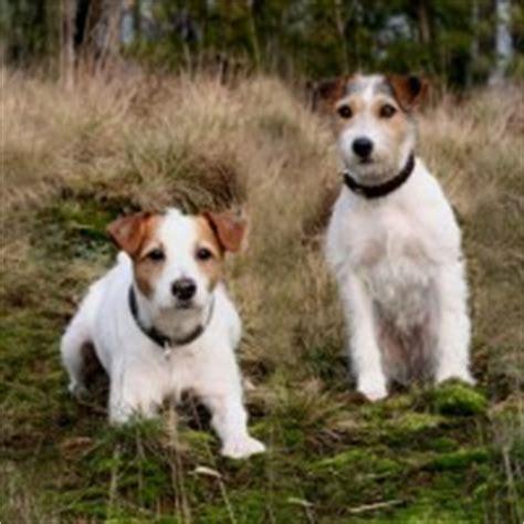 low maintenance breeds the best low maintenance breeds breeders guide