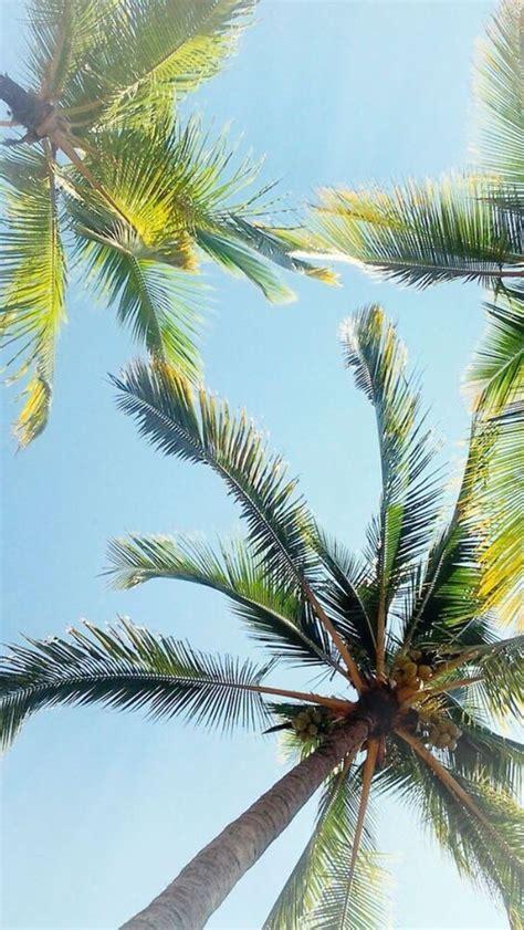 Tree Wallpaper Pinterest | palm trees summer iphone wallpaper wallpaper pinterest