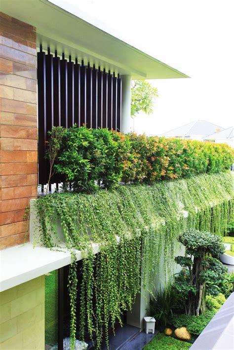 Pagar Plastik Untuk Tanaman Rambat jual tanaman li kuan yu kwan yew suplier tanaman