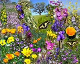 Flower Spring by Spring Flowers Flowers Of Spring Flowers Magazine