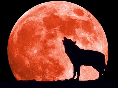 way past normal moons blood moons and werewolves is there a connection