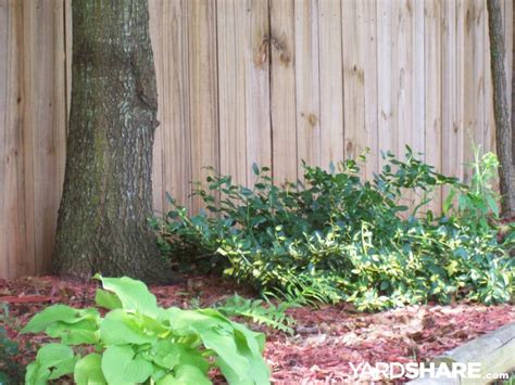 landscaping ideas gt backyard fence line yardshare