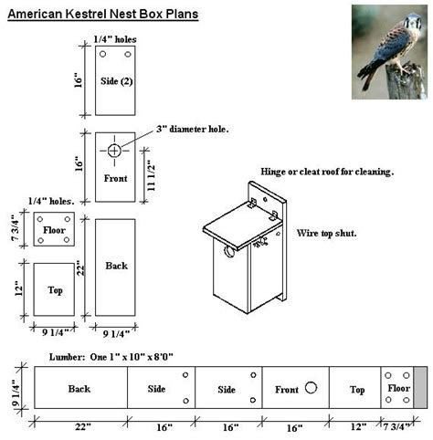 kestrel house plans diy kestrel bird house plans plans free