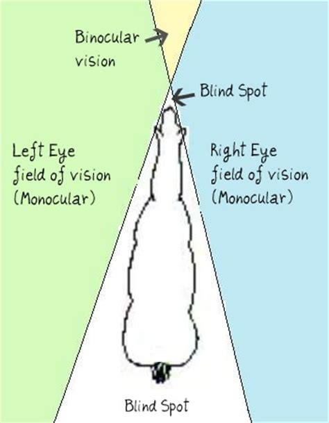 vision 15 minute horse fix