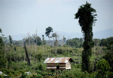 hutte sur pilotis en indon 233 sie des tribus victimes de la d 233 forestation se