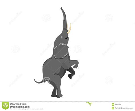 Elephant Standing On Hind Legs by Elephant Standing Straight On Legs Royalty Free Stock