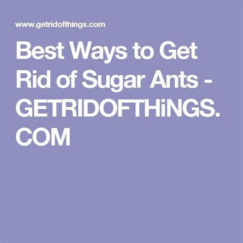 best way to get rid of ants in bathroom best 25 sugar ants ideas on pinterest homemade ant