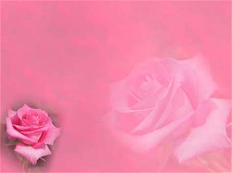 theme powerpoint rose rose 03 powerpoint templates
