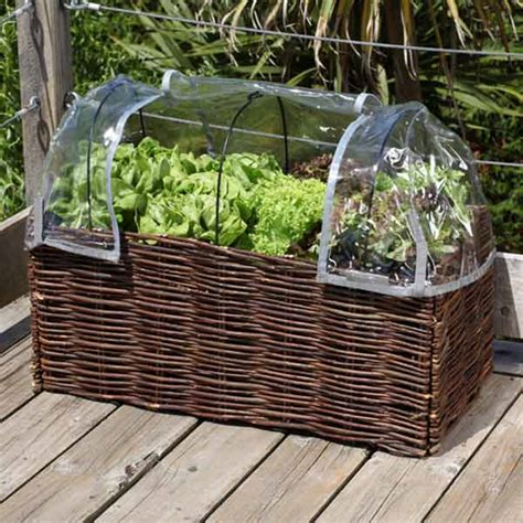burgon and salad planter greenhouse cover on sale