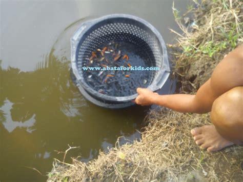 Serok Saringan Ikan 12cm teknik pendederan benih ikan benih ikan jogja