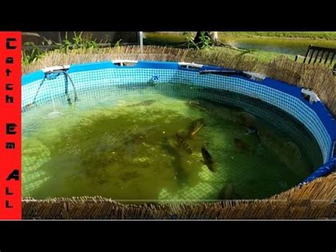 How To Build A Pond Using A Pool In Your Backyard Catch How To Make A Pool In Your Backyard