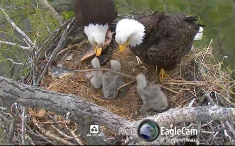 17 best images about alcoa eagle nest on pinterest