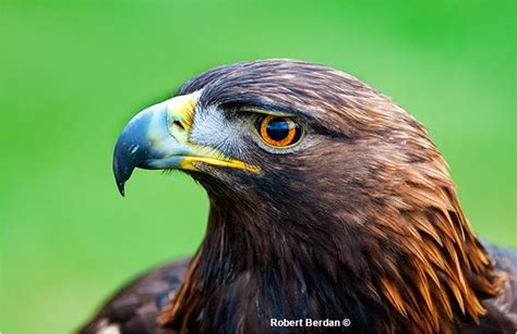 close encounters at the birds of prey center in coaldale