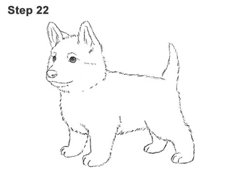 how to draw a german shepherd puppy how to draw a german shepherd puppy step by step www pixshark images galleries