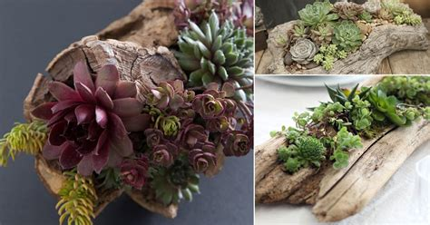 creative diy succulent driftwood planter ideas balcony