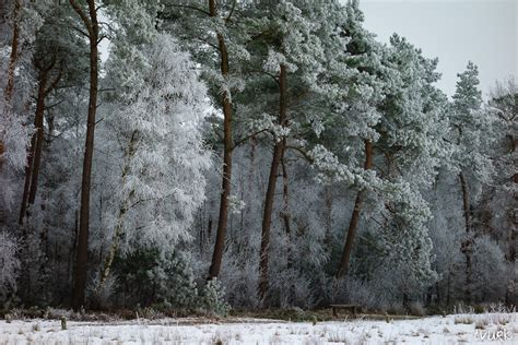 frosty tree frosty trees by tvurk on deviantart