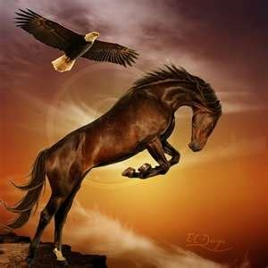 Horse Bed My Horse And My Eagle Sigh Love Animals Horse