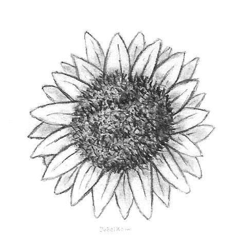 bloemen zwart wit tekening zonnebloem drawings tekeningen