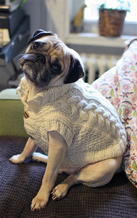 sweaters for pugs pug slope 187 archive 187 sweater weather