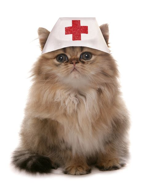cat cat cat doctor