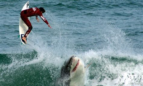 joyride shark attack south africa 2014 world s top shark attack hotspots