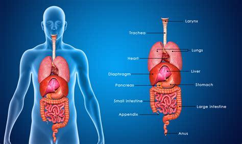 schmerzen in der linken brust beim liegen brennen in der brust ursachen und behandlung