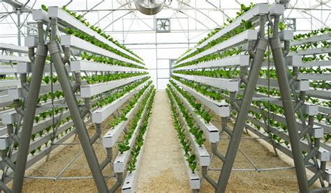 owning a owning a hydroponic a frame pegasus agriculture