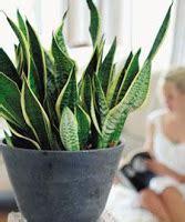 nieuw huis zuiveren de groen wonen startpagina groen wonen expertpagina nl