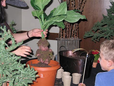 professor sprout demonstrates   plant  mandrake