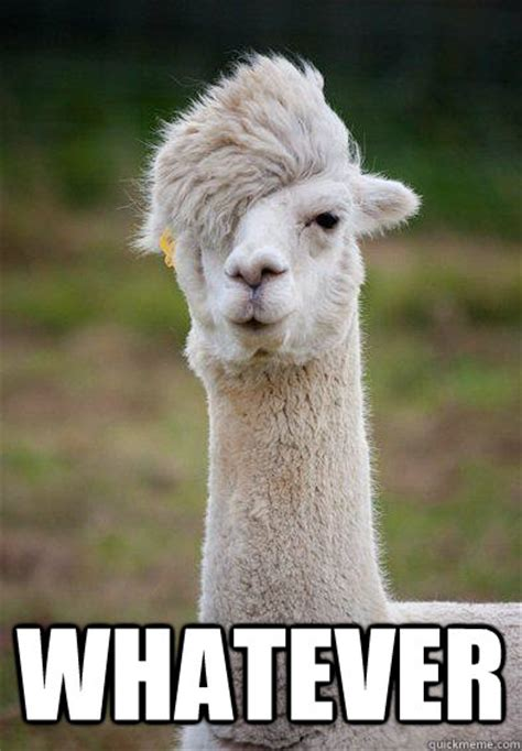 Whatever Memes - whatever hipster llama quickmeme