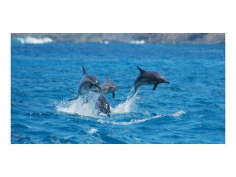 speed boat oahu speedboat dolphin snorkel tour from ko olina marina