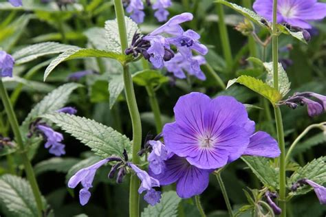 wilde bloemen in duitsland vaste planten gebruiken in je tuin