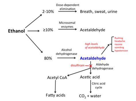 Acetaldehyde Detox by 술 먹고 얼굴 빨개지는 이유 알코올 대사과정 알코올 소화과정 술 먹고 운동 팔용동 파워짐에서