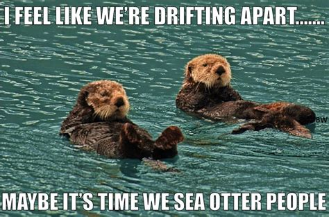 Sea Otter Meme - pun for your life at thepunrun now here this time