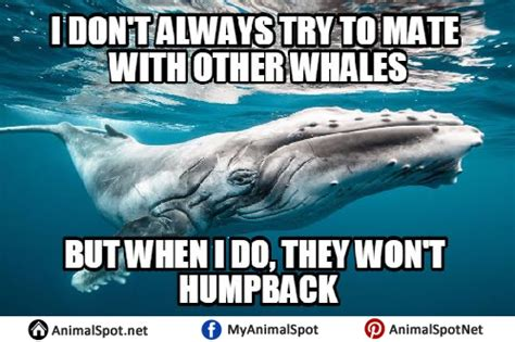 Oh Whale Meme - whaling meme 28 images whaling meme 28 images poorly