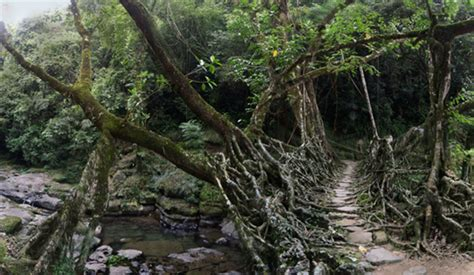 what is root bridge travelbytes mawlynnong and cherrapunjee fascinating root