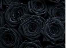 Gothic Black Roses Wallpaper Loading