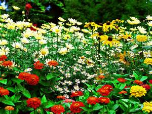 garden flower types free flower garden hd wallpaper background