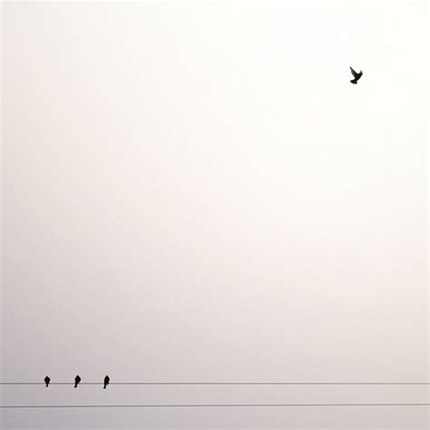 blog minimal art vzla i know why the caged bird sings flickr photo sharing