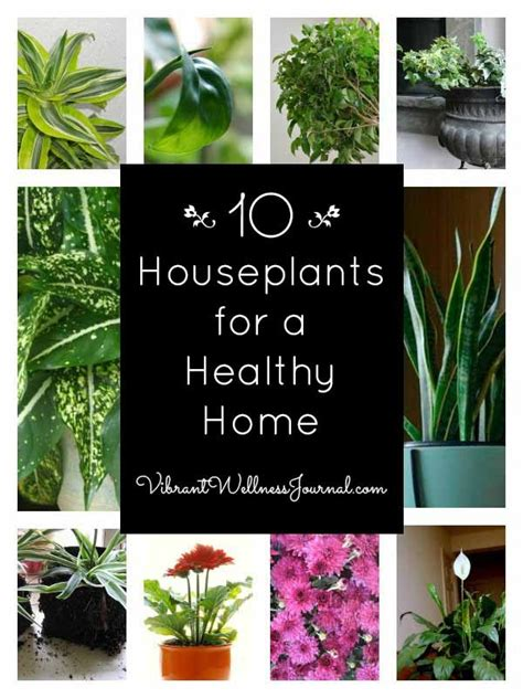 top indoor plants what r the best house plants escortsea