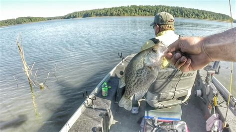 crappie fishing  minnows clarks hill lake youtube