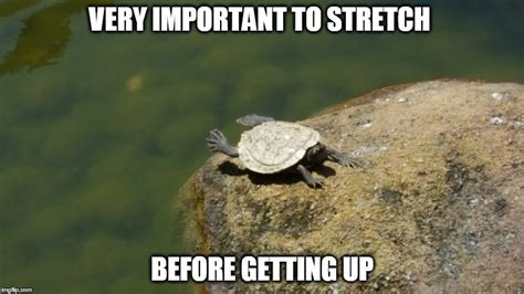 Turtle Meme - turtle stretch imgflip