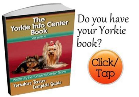 how to a yorkie to outside terrier information center all about yorkies