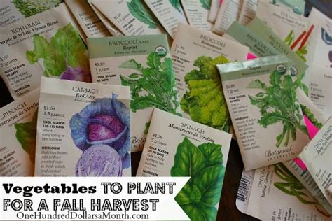 what do you plant in a fall garden planting a fall vegetable garden time to start your seeds