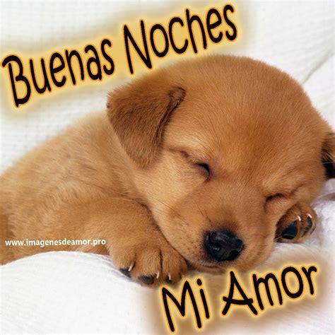 imagenes de perritos tiernos de buenos dias im 225 genes de perritos tiernos con frases de buenas noches
