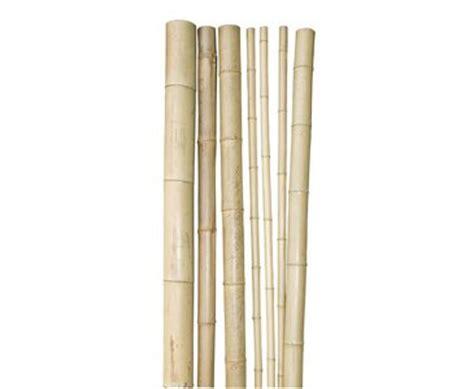 bambusrohr quot tokio quot lackiert g 252 nstig kaufen - Bambus Discount