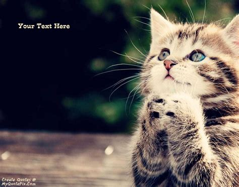 i love cats cute cat kitten pictures cute cat write quote on cute cat picture