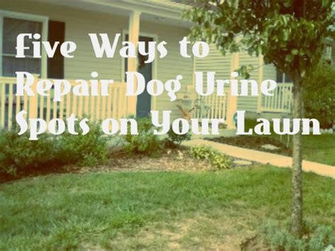 my dog pees in the same spot in the house condo blues five natural ways to repair brown grass from dog pee